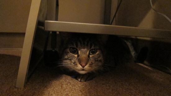 max-hiding