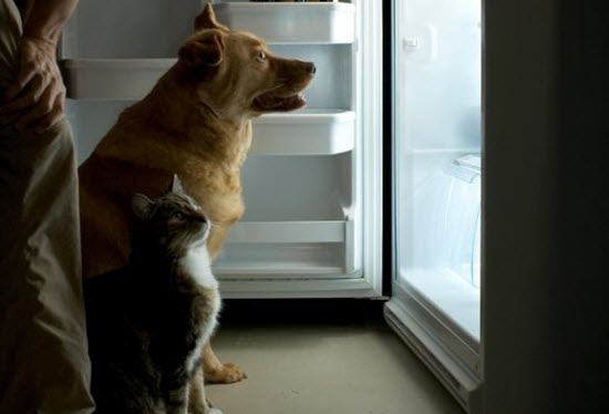 man-dog-and-cat-in-front-of-fridge